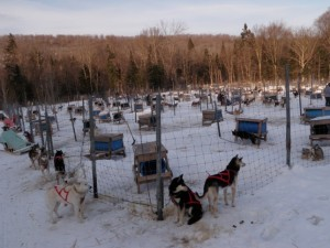 The sound of more than a hundred eager sled dogs is almost deafening.