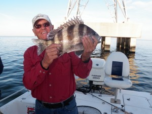 Sheepshead are pretty, tasty and frequently caught on Captain Kreeger's outings. (Photo: Tom Adkinson)