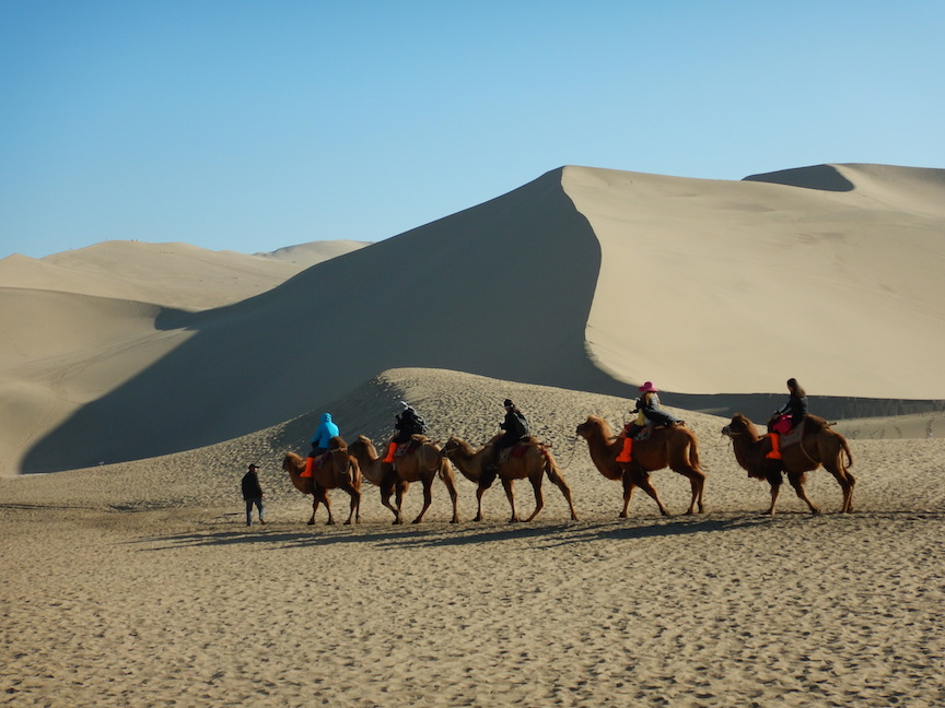 Camels along the Silk Road (Photo: Tom Adkinson)