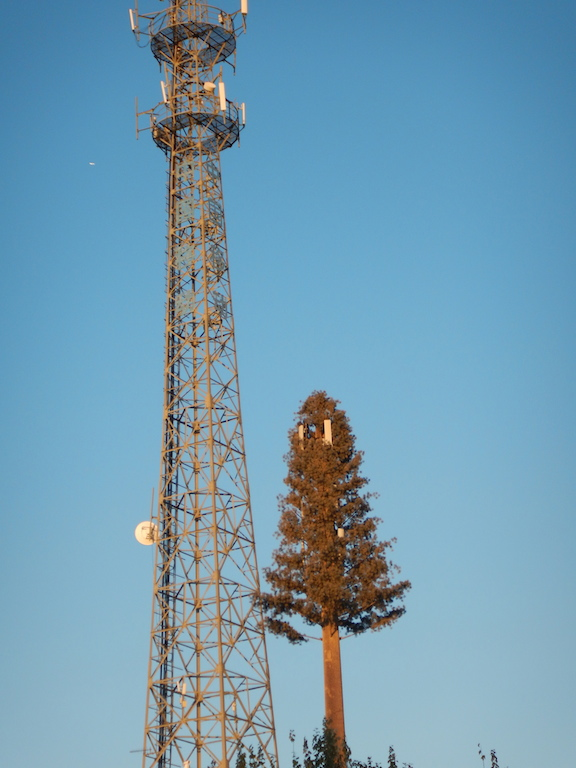 "Gobi Desert ""hidden"" cell tower (Photo: Tom Adkinson)"